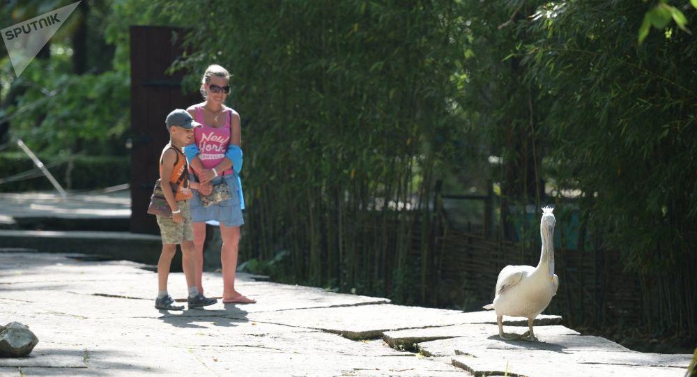 Приморский парк в Гагре.