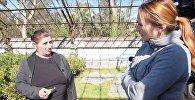 Саженцы мандаринов и фейхоа бесплатно получили более 70 семей Абхазии