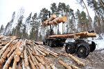 Архивное фото рубки лесати