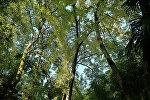 Крона деревьев