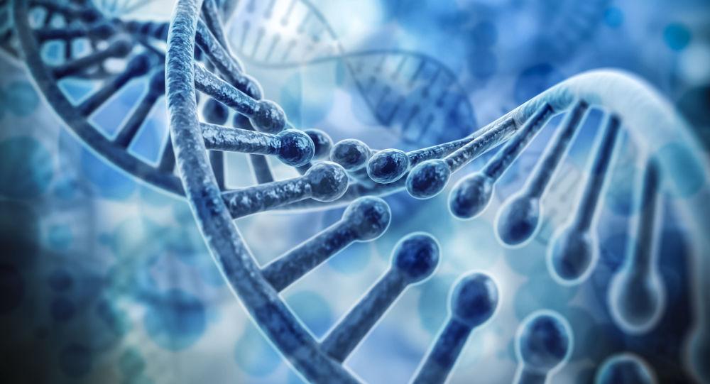 Компьютерная модель ДНК