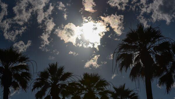 Пальмы на набережной  - Sputnik Абхазия
