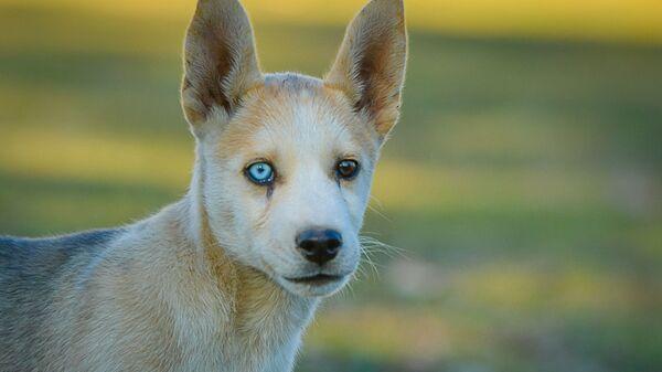 Собаки  - Sputnik Абхазия