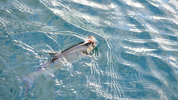 Рыбалка - Sputnik Аҧсны
