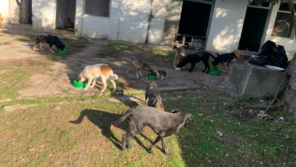 Фотография собак которые в последствии были застрелены  - Sputnik Абхазия