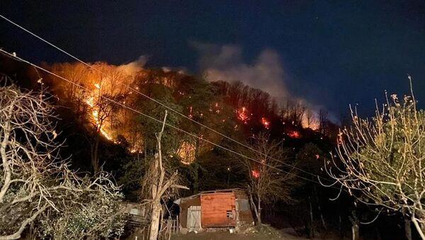 Лесные пожары в Гагрском и Гудаутском районах - Sputnik Абхазия
