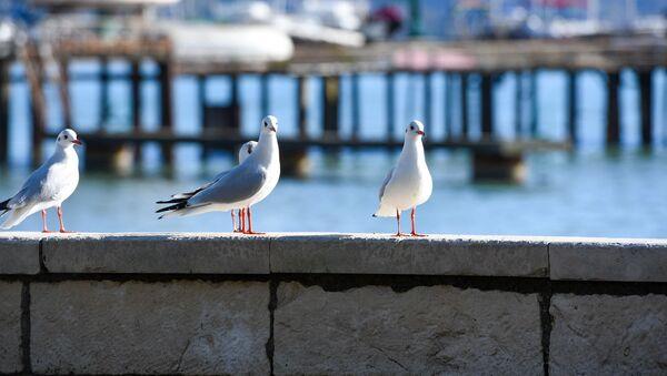 Чайки на набережной  - Sputnik Абхазия