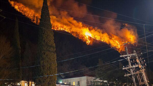 Лесные пожары в Гагре. 7 января 2021 - Sputnik Абхазия