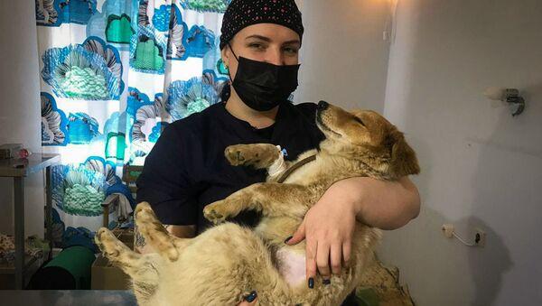 Акция стерилизации домашних и бродячих животных в Гудауте - Sputnik Абхазия