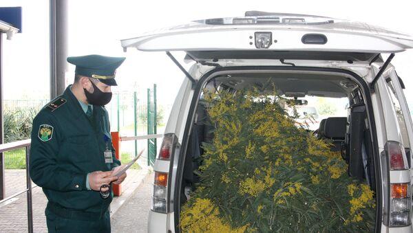 Незаконный ввоз крупных партий цветочной продукции - Sputnik Абхазия