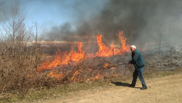 В окрестностях сел Кындыг и Баслаху ликвидировали природные пожары на площади в 11 гектаров - Sputnik Абхазия