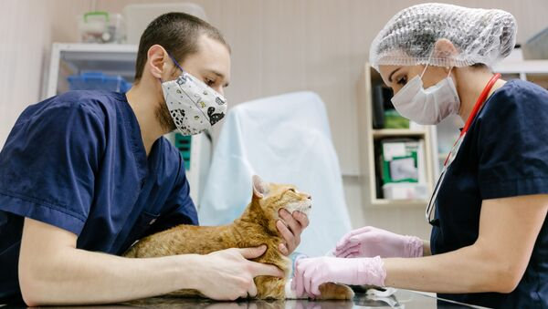 Работа ветеринарной клиники в Иванове - Sputnik Аҧсны
