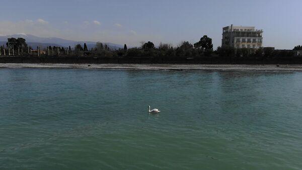 Лебедь в море  - Sputnik Абхазия