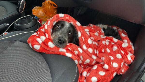 Бездомные собаки из Абхазии  - Sputnik Абхазия