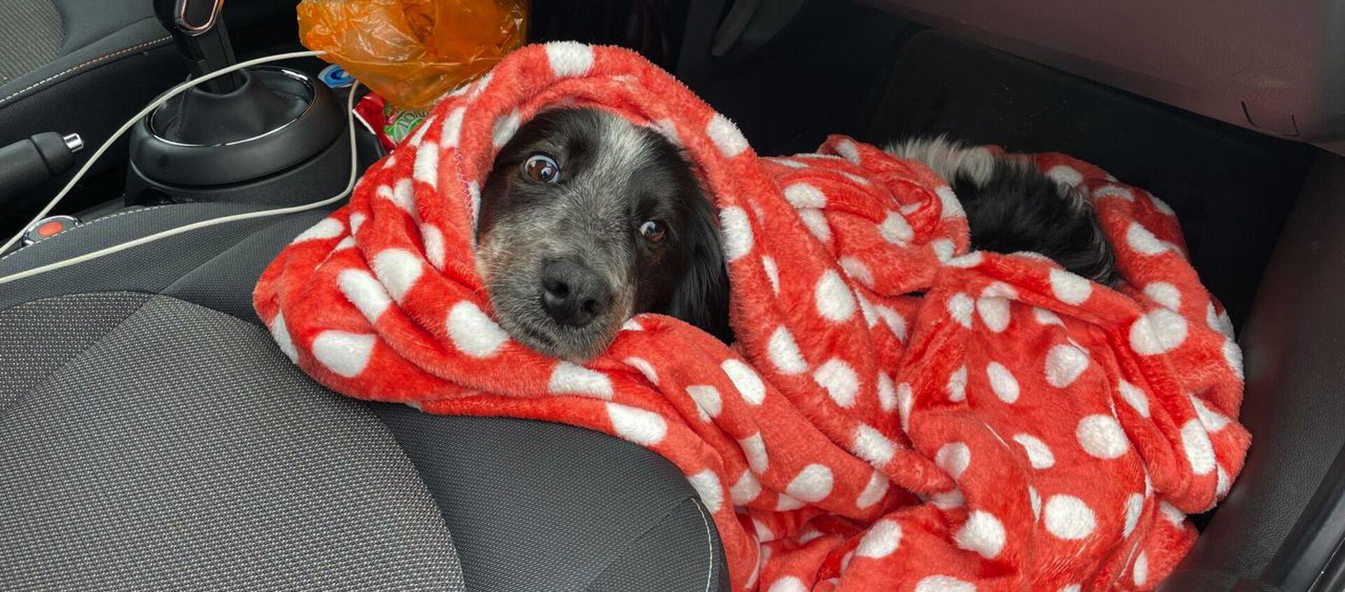 Бездомные собаки из Абхазии  - Sputnik Абхазия, 1920, 25.04.2021