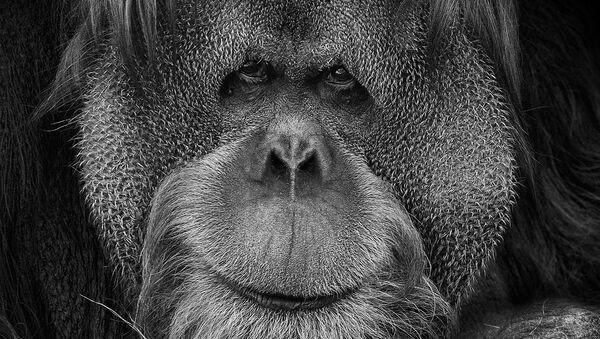 Снимок из авторской фотосерии российского фотохудожника Михаила Киракосяна «Мы похожи на вас», героями которой стали животные Московского зоопарка - Sputnik Абхазия