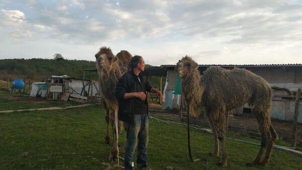Верблюды - Sputnik Абхазия