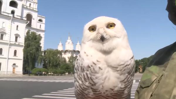 Полярная сова, соколы и филин: как хищные птицы защищают Кремль от ворон - Sputnik Абхазия
