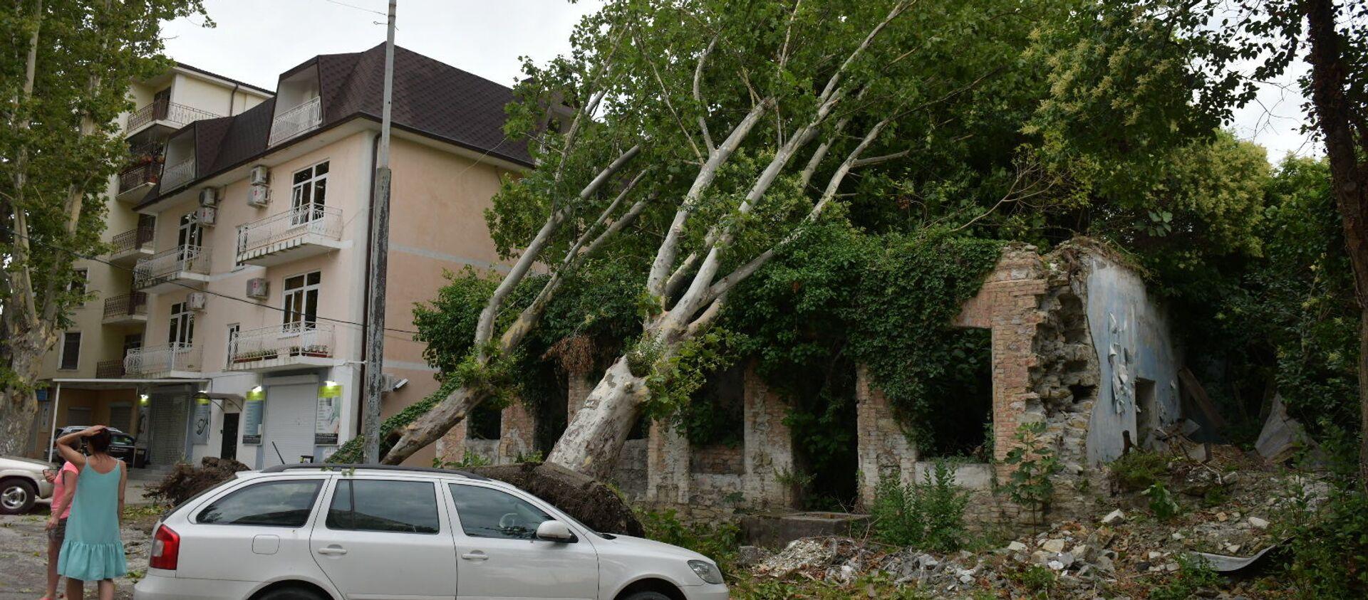 Посносил крыши и деревья: последствия сильного ветра в Сухуме - Sputnik Абхазия, 1920, 04.07.2021