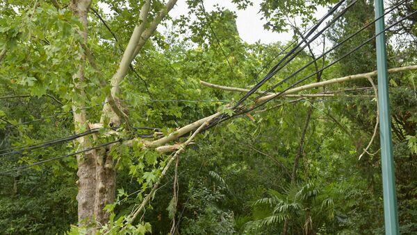 Сильный ветер в Сухуме повалил деревья  - Sputnik Аҧсны