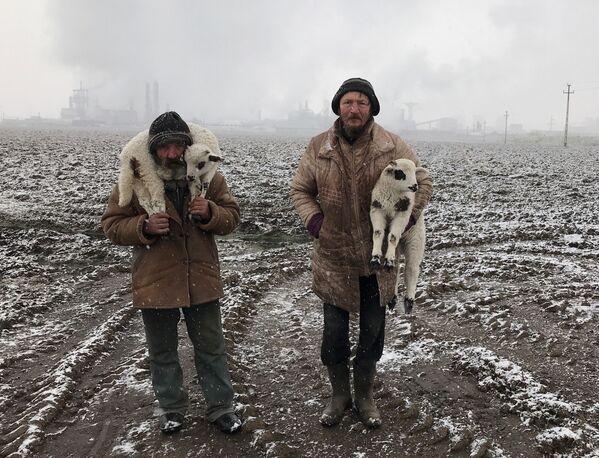 Снимок Transylvanian Shepherds фотографа из Венгрии Istvan Kerekes, получивший Гран-при конкурса IPPAWARDS 2021 - Sputnik Абхазия