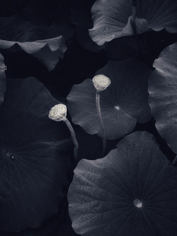Снимок фотографа из Великобритании Mohan Wang, занявший 2-е место в номинации Nature конкурса IPPAWARDS 2021 - Sputnik Абхазия