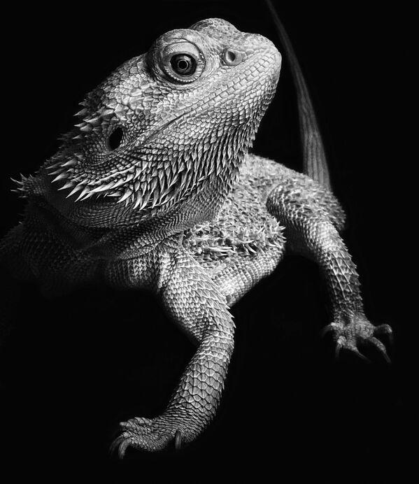 Снимок Strike a Pose фотографа из Нидерландов Laila Bakker, занявший 1-е место в номинации Animals конкурса IPPAWARDS 2021 - Sputnik Абхазия