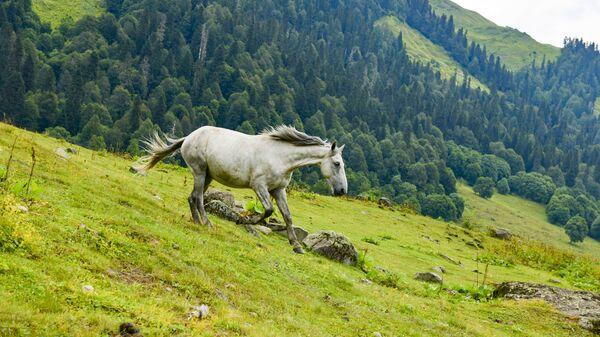 Лошади пасутся на поле - Sputnik Аҧсны