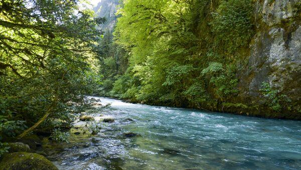Рицинский реликтовый национальный парк - Sputnik Абхазия