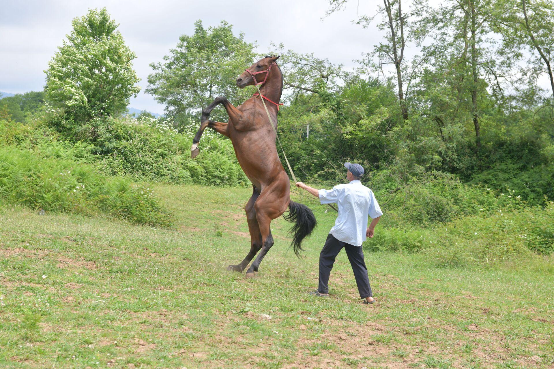 Мастер по апацхам и мастер спорта по конному спорту Отар Чанба - Sputnik Абхазия, 1920, 12.10.2021