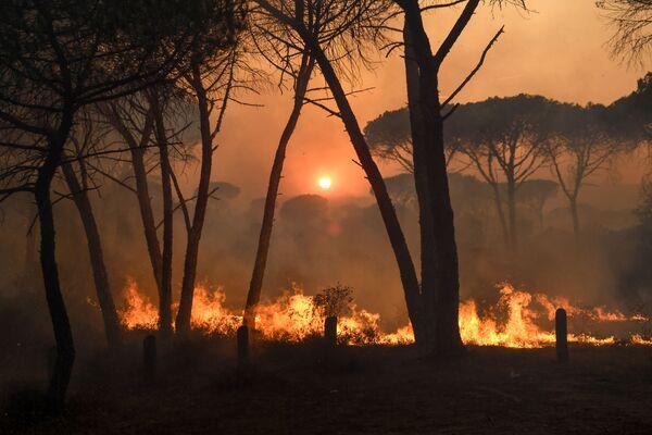 Лесной пожар недалеко от Гонфарона, на юге Франции - Sputnik Абхазия