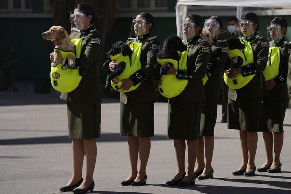 Полицейские представляют щенков для дрессировки во время церемонии в Национальной полицейской академии в Ла-Пасе, Боливия. - Sputnik Абхазия
