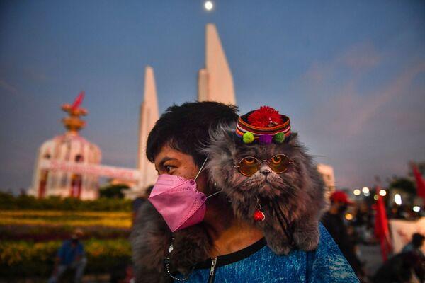 Кошка на плече протестующего во время демонстрации, призывающей к отставке премьер-министра Таиланда в Бангкоке. - Sputnik Абхазия