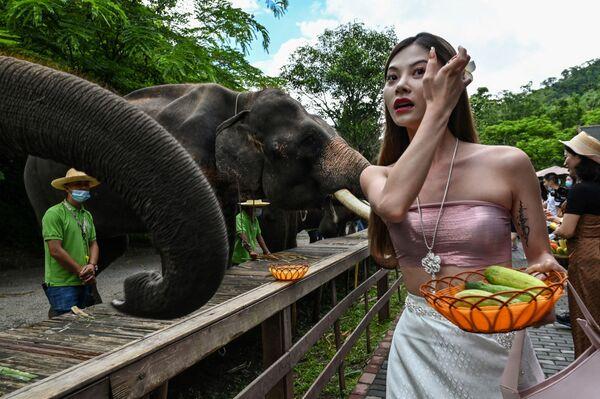 Девушка кормит слонов в Долине диких слонов, природном заповеднике для диких слонов, в провинции Юньнань на юго-западе Китая. - Sputnik Абхазия