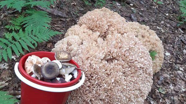 Лесные грибы  - Sputnik Абхазия