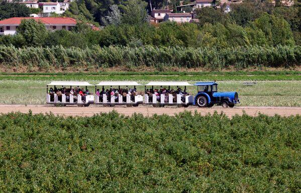 Сборщики урожая цветов жасмина в поезде, Франция - Sputnik Абхазия