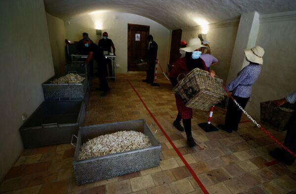 Сборщики с корзинами цветов жасмина в Пегомасе, Франция   - Sputnik Абхазия