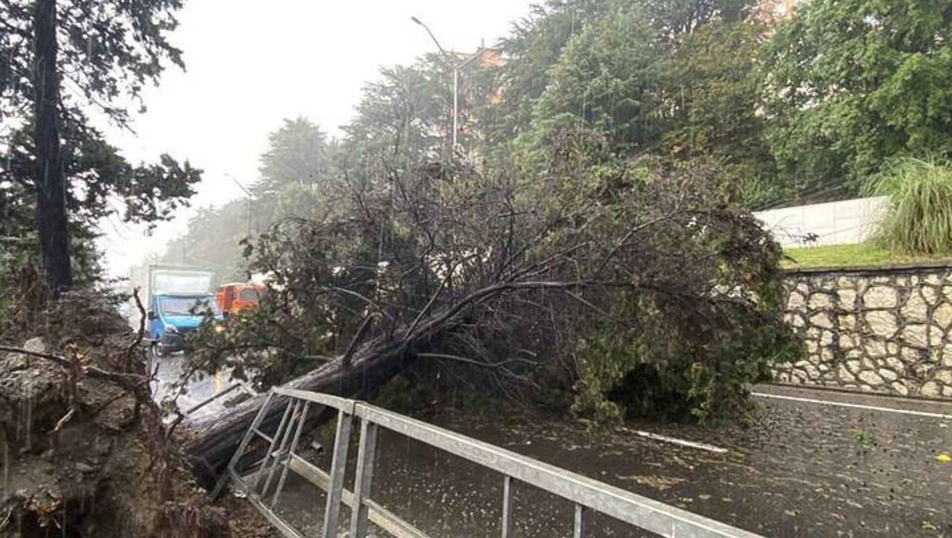 Дерево упало на проезжую часть в Сочи  - Sputnik Абхазия, 1920, 02.09.2021