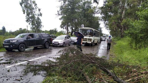 Дерево перекрыло проезжую часть в районе Киндги  - Sputnik Аҧсны