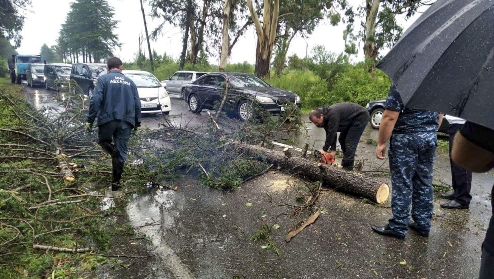 Дерево перекрыло проезжую часть в районе Киндги  - Sputnik Абхазия, 1920, 02.09.2021