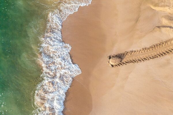 Снимок Back to Adventure фотографа Qasim Al Farsi, занявший 1-е место в категории Wildlife конкурса Drone Awards 2021 - Sputnik Абхазия