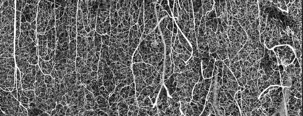 Снимок 3D vasculature of an adult mouse brain американского фотографа Dr. Andrea Tedeschi, занявший шестое место в фотоконкурсе Nikon Small World 2021 - Sputnik Абхазия