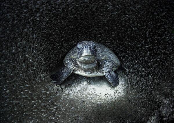 Снимок фотографа Aimee Jan, победивший в конкурсе Ocean Photographer of the Year 2021 - Sputnik Абхазия