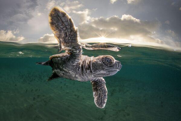 Снимок фотографа Matty Smith, занявший третье место в конкурсе Ocean Photographer of the Year 2021 - Sputnik Абхазия