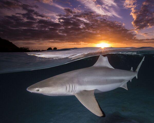 Снимок фотографа Renee Capozzola, победивший в категории Female Fifty Fathoms Award конкурса Ocean Photographer of the Year 2021 - Sputnik Абхазия