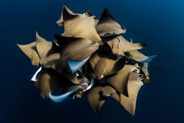 Один из снимков серии фотографа Alex Kydd, занявшей третье место в категории Collective Portfolio Award конкурса Ocean Photographer of the Year 2021 - Sputnik Абхазия