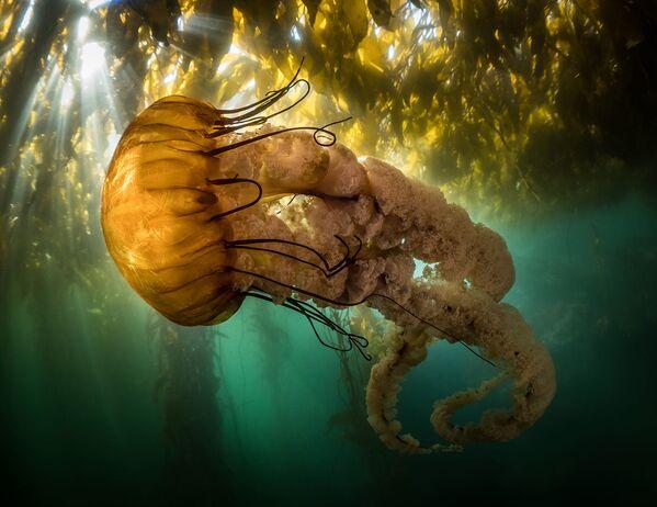 Снимок фотографа Maxwel Hohn, вошедший в шорт-лист категории Community Choice Award конкурса Ocean Photographer of the Year 2021 - Sputnik Абхазия