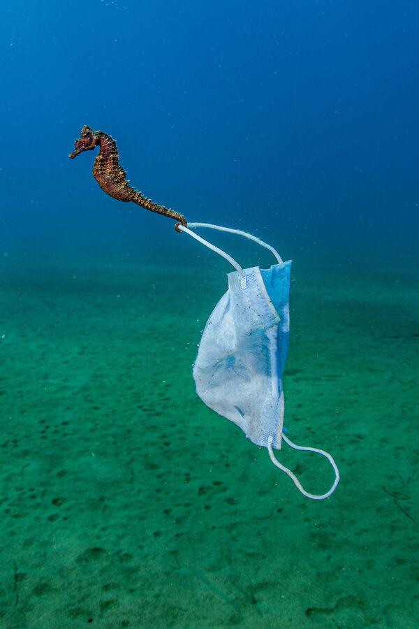 Снимок фотографа Nicholas Samaras, высоко оцененный в категории Conservation Photographer of the Year конкурса Ocean Photographer of the Year 2021 - Sputnik Абхазия