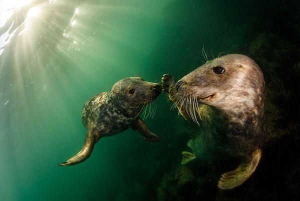 Снимок фотографа Grant Thomas, высоко оцененный в категории Adventure Photographer of the Year конкурса Ocean Photographer of the Year 2021 - Sputnik Абхазия