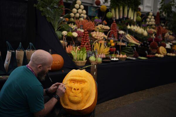Карвер работает над дизайном тыквы-гориллы на выставке цветов Chelsea Flower Show. - Sputnik Абхазия
